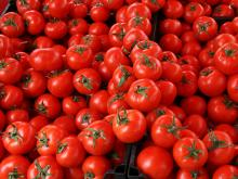 Fresh Round Quality  Iron   Red  Tomatoes For Sale....