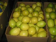 Fresh Citrus Fruits /Yellow Lemon & Green Lime/ Yellow Eureka Fresh Lemon.