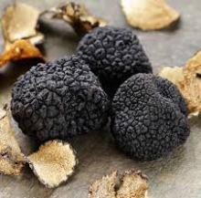 Fungus & Truffles