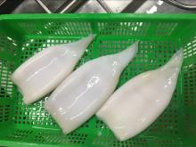 Frozen Peru squid tubes skinless