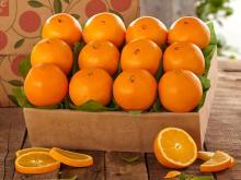 Premium fresh navel oranges