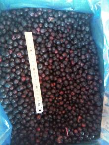 A grade frozen blueberry,IQF blueberry