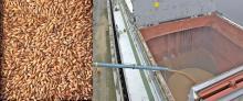 Feed Barley FOB Black Sea