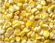 Good Price Freeze Dried Corn