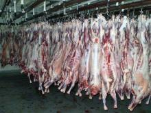 Halal Fresh / Chilled / Frozen Goat Carcass, Sheep, Mutton, Beef, Bufallo & Veal Carcasses