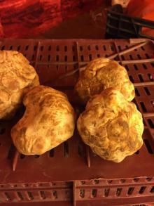 Fresh and Dried Desert Truffles