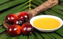 Natural Organic 100% Pure Palm Oil//