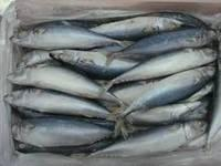 Fresh and Frozen Horse Mackerel Fish, Herring Fish ,Dry Stockfish