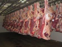 Frozen Mutton Beef, Frozen Buffalo Beef,Frozen Goat Beef