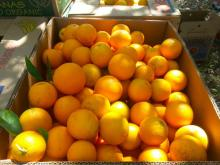 Fresh Sweet Naval and Valencia Oranges