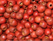 frozen hawthorne berry