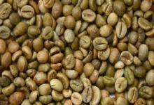 Robusta Coffee Beans / POLISHED ROBUSTA GREEN COFFEE BEANS...