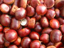 Chestnut / Chest Kernel / Chestnut Supplier / Chestnut Supplier /Chestnut Price
