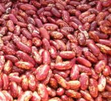 Red Kidney Beans ( Red Beans ) and Dark Red Kidney Beans