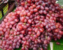Свежие фрукты сладкая вишня на продажу