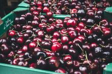 Dark Red fresh cherries for sale