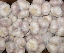 Fresh Natural Pure White Garlic Wholesale
