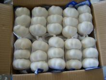 Supply Fresh Style Pure White Garlic