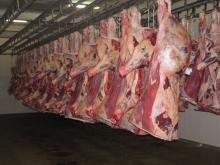 Frozen buffalo halal meat