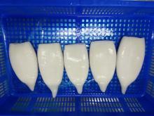 Frozen squid tubes Ommastrephes Bartrami