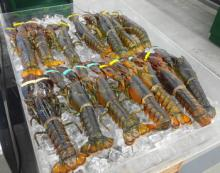 Raw Frozen Lobster Tails