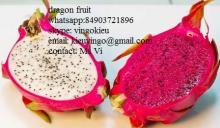 vietnam dragon fruit whatsapp 84903721896