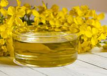 Premium Quality Crude / Refined Canola Oil / Rapeseed Oil Manufacture