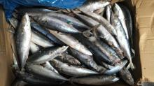 LAND Frozen pacific mackerel 50-60
