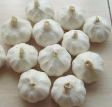 Fresh Organic White Garlic