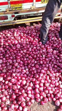 Round fresh red onions