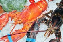 Frozen Lobster seafood online for sale