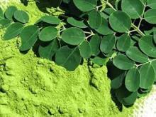 Moringa non organic leaves powder at wholesales prices
