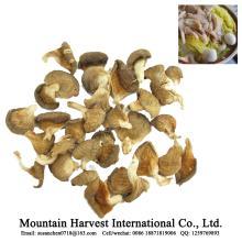 Dried Oyster Mushroom with BRC ISO HACCP FDA