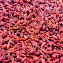 Dried Goji Berry, high quality on sale. 30% Discount now on