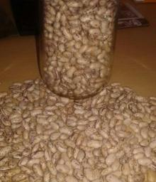 Light Speckled Sugar Beans
