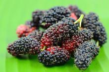 Fresh quality mulberries / freeze dried mulberries now available on sale. 30% discount