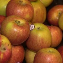 Fresh Delivery Quality Apple now Available on Sale. 30% Discount