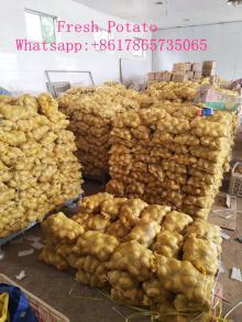 China fresh potato export quality