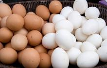 Fresh Table Chicken Eggs ( Brown and White) AT REASONABLE PRICES