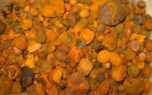 Cow gallstone at competitive prices