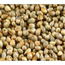 Millet for sale at whole sales prices