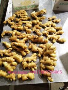 Fresh ginger Shandong China supply