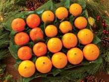 Fresh Citrus Fruits, Juicy Oranges