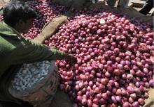 Thailand  fresh   red   big   onion