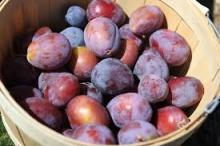 Organic Fresh Prunes now available on sale