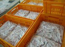 Premium Quality Processed Frozen Chicken Feet/Paws /Wings for sale