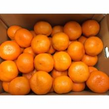 Fresh Sweet Valencia & Navel Oranges Now Available on Sale. 30% Discount
