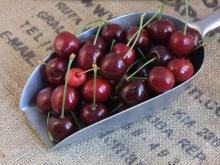 Fresh organic cherries now available on sale. 30% discount