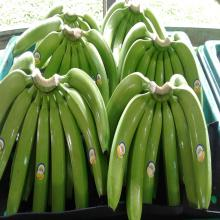 Export prices fresh green bananas wholesale for sale