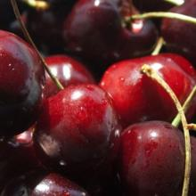 Wholesale cherry fresh with great quality